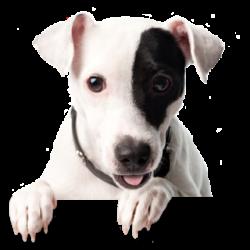noflash_dog